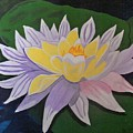 Waterlily by Juanita Couch