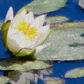 Waterlily Reflections by Modern Art