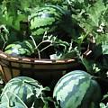 Watermelon In A Vegetable Garden by Jeelan Clark