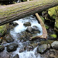 Waters Run Through It by LKB Art and Photography