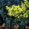 Wattyl - Wild Flower Of Australia by Kaye Menner
