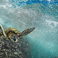 Wave Rider Turtle by Leonardo Dale