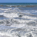 Waves 1 by Carol Herbert