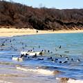 Waves Of Ducks by Ed Weidman