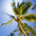 Waving Palm by Ferry Zievinger