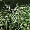 Waving Reed by Go Van Kampen