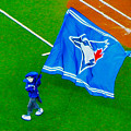 Waving The Flag For The Home Team      The Toronto Blue Jays by Nina Silver