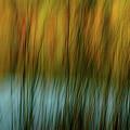 Wavy by Randy Pollard