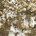 Waxleaf Privet Blooms On A Sunny Day In Sepia Tones by Marian Bell
