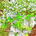 Waxleaf Privet Blooms On A Sunny Day by Marian Bell