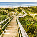 Way To Neck Beach by Jorgo Photography - Wall Art Gallery