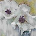 Wayside Flowers by John Anderson