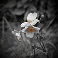 We Fade To Grey 4 by Lance Sheridan-Peel