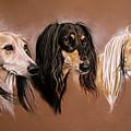 'we Three Salukis' by Caroline Collinson