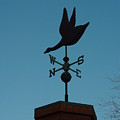 Weather Vane by Alice Markham