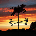 Weather Vane  by Gravityx9  Designs