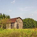 Weathered Barn Basking In The Summer Sun by Sue Smith