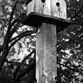 Weathered Bird House by Teresa Mucha