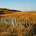 Weathered Dune Fence. by John Greim