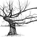 Weathered Old Tree by Joyce Geleynse