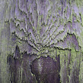 Weathered Wood And Lichen Abstract by Richard Brookes