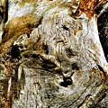 Weathered Wood by Debbie Portwood