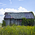 Weatthered Barn by Pat Carosone