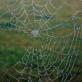 Web After The Storm by William Tasker