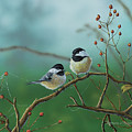 Web Chickadees by Anthony J Padgett