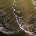 Web Sparkle by Robert Potts