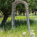 Wedding Bliss by Tammy Bryant