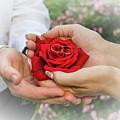 Wedding Rings by Nataly Raikhel