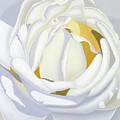 Wedding Rose by Loraine LeBlanc