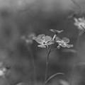 Weed 3 by Simone Ochrym