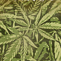 Weed Abstracts Two by Alice Gipson