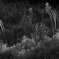 Weeds 5 by Catherine Sobredo
