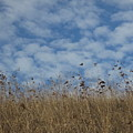 Weeds And Dappled Sky by Suzanne Leonard