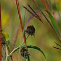 Weeds by Ann Keisling