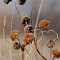 Weeds Are Pretty Too by Margaret Fortunato