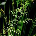 Weeds by Mikki Cucuzzo