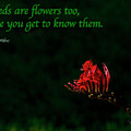 Weeds Are Flowers Too by Bill Posner