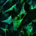 Weeds by Rachel Christine Nowicki