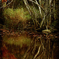 Weeping Branch by Cindi Ressler