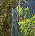 Weeping Rock - Zion Canyon by Sandra Bronstein