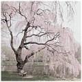 Weeping Spring 2 - Holmdel Park by Angie Tirado