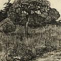 Weeping Tree by Vincent Van Gogh