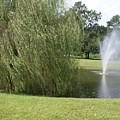 Weeping Willow And Fountain by Warren Thompson