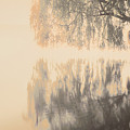 Weeping Willow Woman by Patrick Nicholas