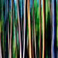 Weeping Yellowstone Trees by Todd Klassy