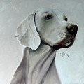 Weimaraner by Dick Larsen